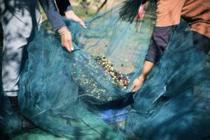 Agrolio e Radici di Puglia tra tradizione e innovazione