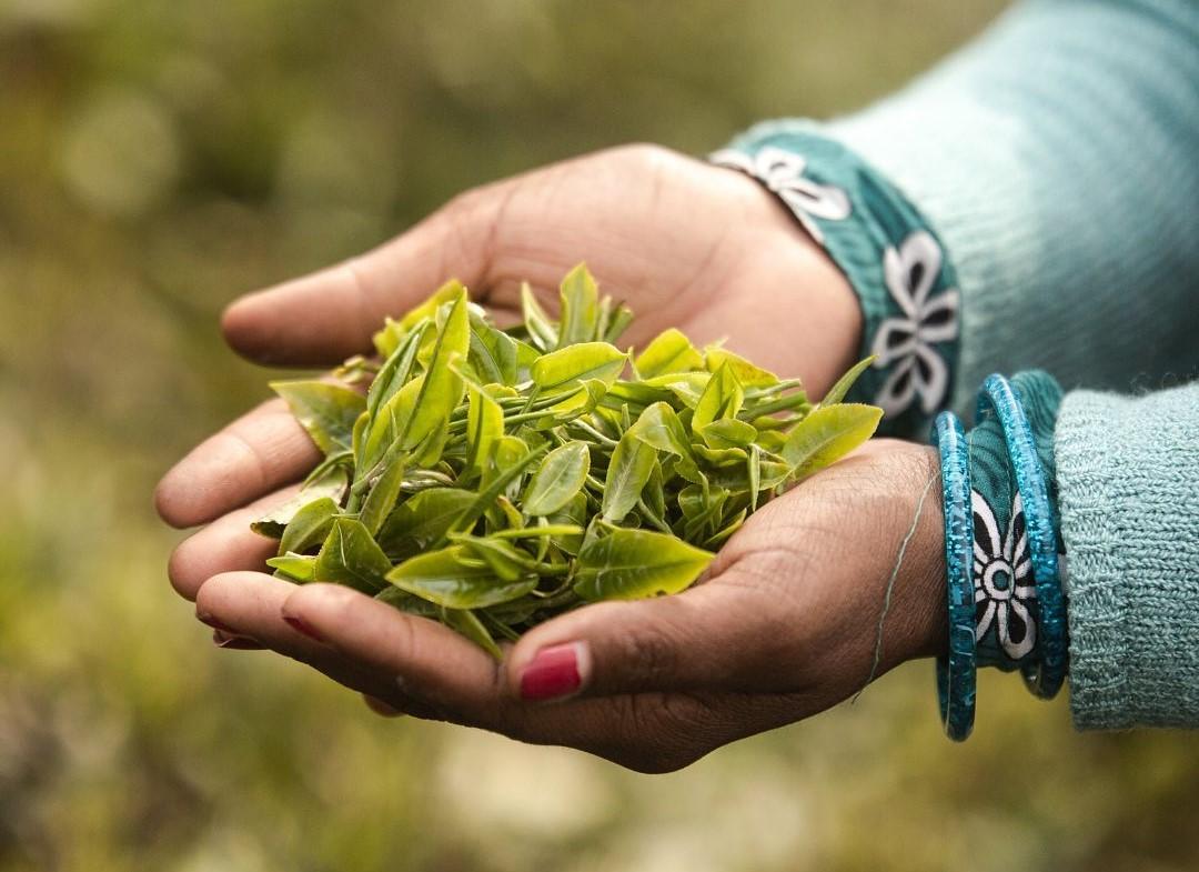 Vahdam Teas, il tè indiano